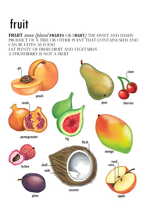 what fruit am i how fruit is developed books fruit diagram by sianjarvis93 on deviantart