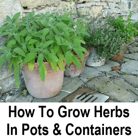 how to grow herbs how to grow herbs in containers
