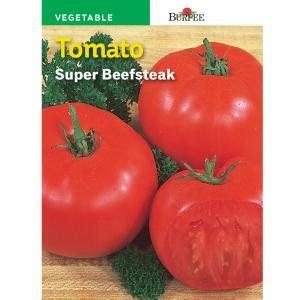 burpee tomato super beefsteak seed   home depot
