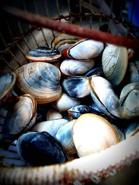best oysters in cape cod 552 best images about biomimicry world on