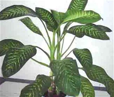what is the feng shui of plants in the bedroom feng shui plants the feng shui architect s blog