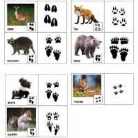 printable animal footprint matching game the gruffalo preschool activities and crafts kidssoup
