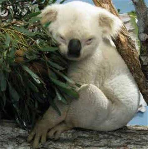 imagenes de animales albinos animales extra 209 os y curiosidades animales 50 animales albinos