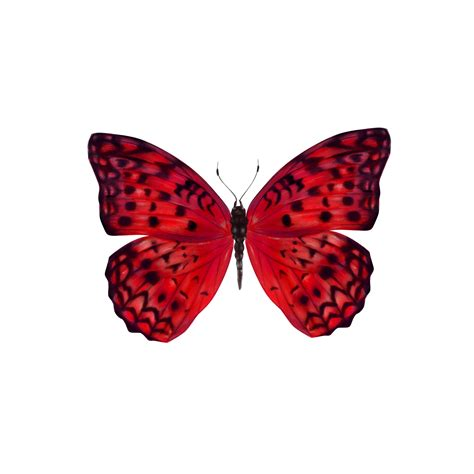 Ordinary Church Games Online #9: Butterfly-by-Spela-Jambrek.jpg