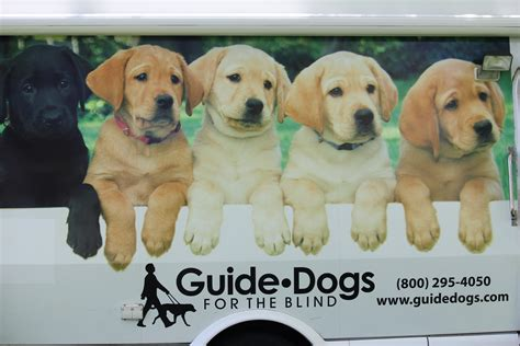 how to a guide for the blind guidedogs for the blind innovationbubble