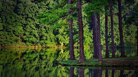 imagenes hd bosques bosque en el lago fondos hd