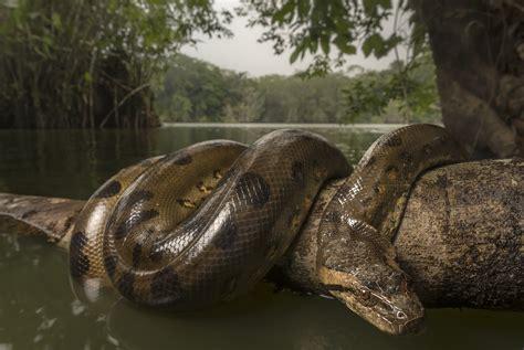 anaconda wallpaper anaconda full hd wallpaper and background image