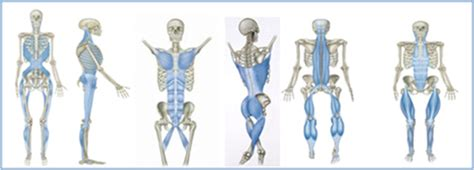 cadenas musculares thomas myers pdf an intro to myofascial meridians in structure function