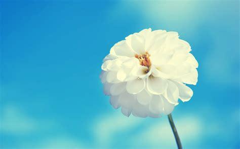 wallpaper flower love hd awesome white flower blue hd love wallpaper love