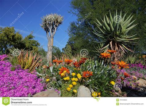 Ojai Botanical Gardens Springtime Bloom In California At Taft Botanical Gardens Ojai C Editorial Stock Photo Image