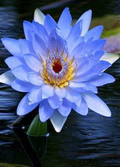 immagini fiori stupendi 17 migliori idee su bellissimi fiori su fiori
