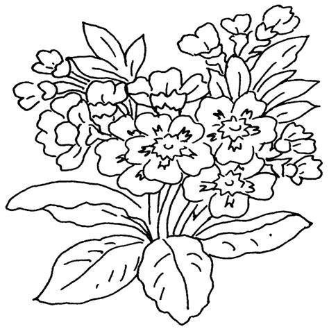 di fiori immagini di fiori da colorare