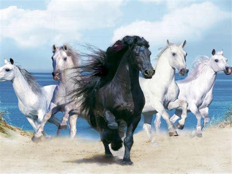 beautiful background  animals hd  black horse