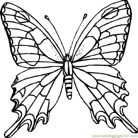 Coloring Pages Butterfly Coloring Page Insects Butterfly Coloring Page
