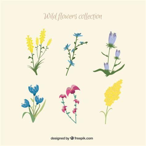 tipo di fiori tipo di fiori selvatici scaricare vettori gratis