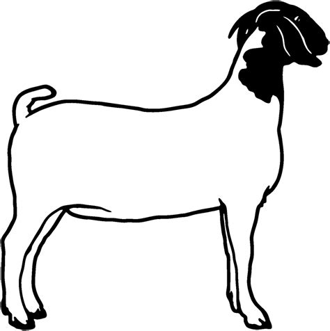 boer goat coloring page boer goat head clipart panda free clipart images