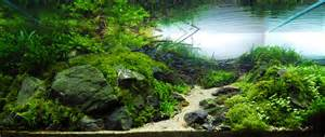 Aquascaping Tanks by Aquascape Cliff Hui Ii Fish Faqs