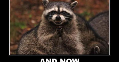 Raccoon Excellent Meme - excellent raccoon meme old board of funnies