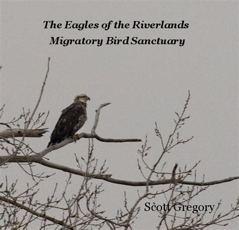 the eagles of the riverlands migratory bird sanctuary by