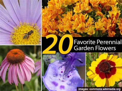 List Of Garden Flowers 20 Favorite Perennial Flowers For The Garden