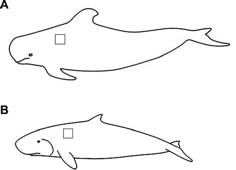 pilot whale coloring page lipid class and depth specific thermal properties in the