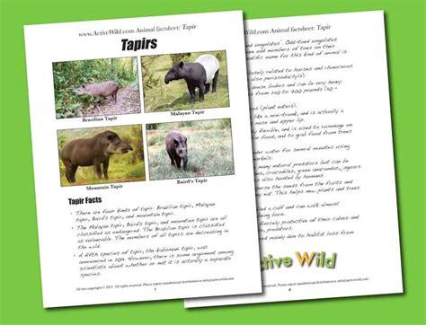 printable animal fact sheets celebrate world tapir day free printable factsheet