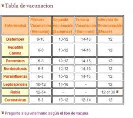 Calendario Y Sus Animales Im 225 Calendario De Vacunas Para Perros Y Cachorros
