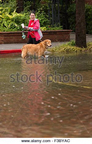 golden retriever charleston sc golden retriever in the stock photo royalty free image 89520190 alamy
