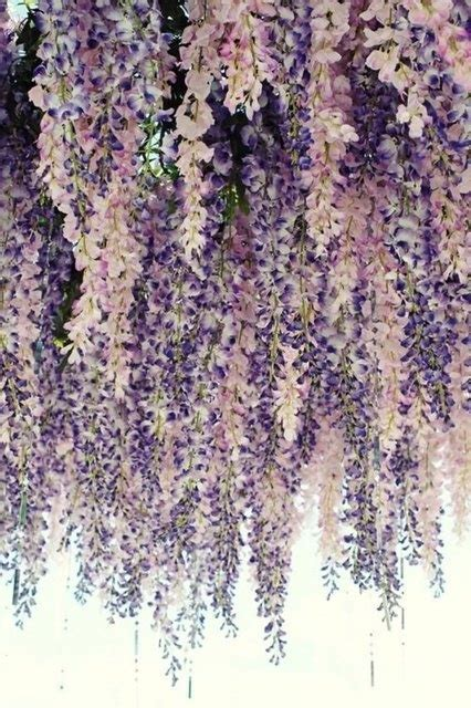 paper flower curtain 25 best ideas about flower curtain on pinterest floral