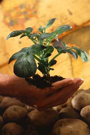 Move On Crop Hitam learn to diagnose plant problems call in you the plant