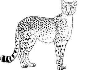 cheetah coloring pages cheetah coloring pages to print coloring home