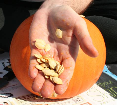 Pumpkin Seed pumpkin seed