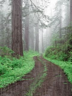 gif wallpaper of nature rain forest rain nature trees forest animated path gif