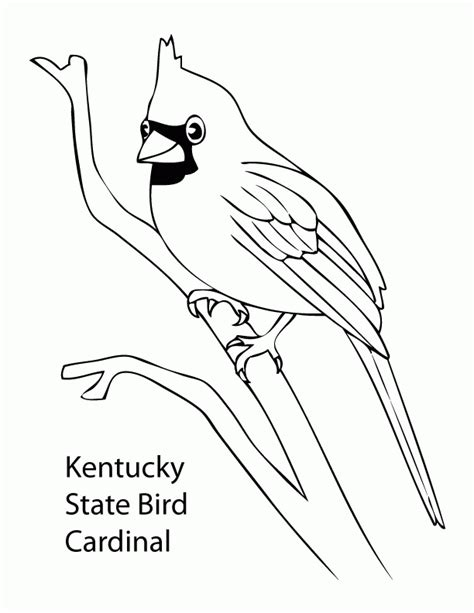 texas state bird page coloring pages