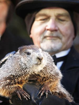 groundhog day usa punxsutawney phil pictures see photos of groundhog day