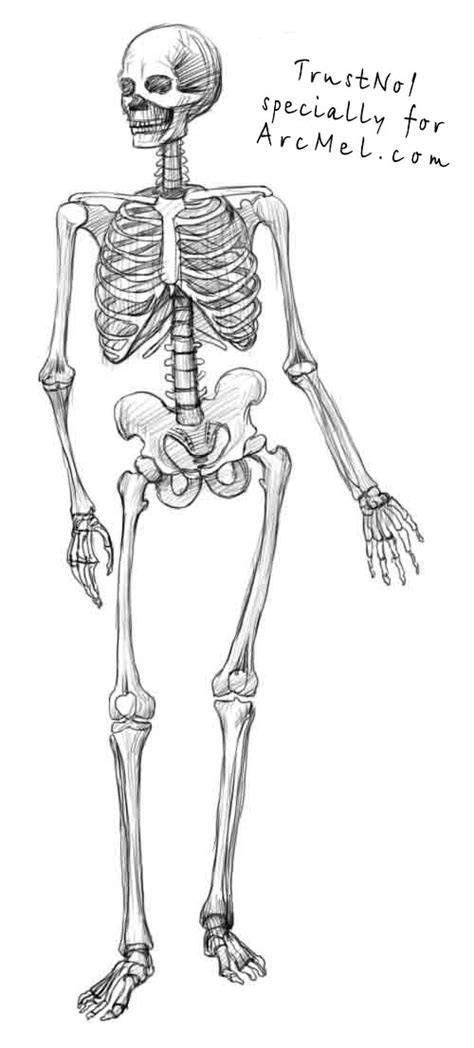 how to draw a skeleton step 4 art pinterest a