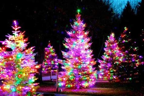 bright and colorful christmas trees pictures photos and