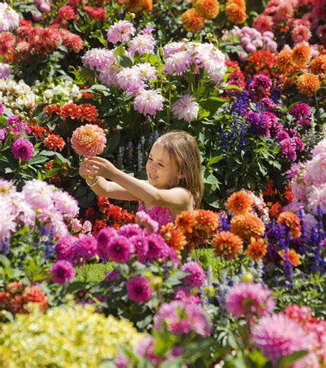 Front Garden Could Be A Piece Of Art By Salvador Dahlia Dahlia Flower Garden