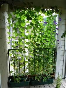 need privacy diy garden privacy ideas the garden glove