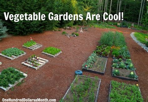 kitchen garden ideas mavis butterfield backyard garden plot pictures week