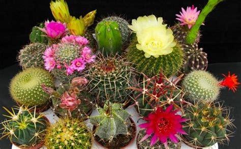 piante con fiore piante grasse con fiore consigli per la coltivazione