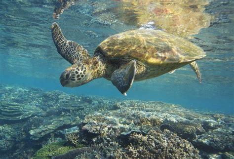 cool      sea turtles travelnext