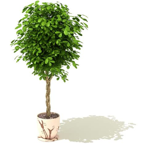 green potted tree 3d model cgtrader com
