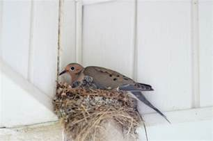 the right way to remove a bird s nest pest control