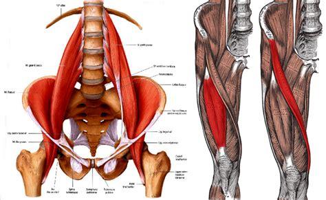 hip flexor diagram why doing hip flexor stretches may not loosen and open up