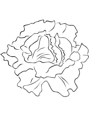 lettuce leaf coloring page lettuce coloring www pixshark com images galleries