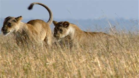 imagenes de animales salvajes de africa imagenes de animales salvajes de africa
