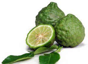 Benih Biji Jeruk Kalamondin Citrus Microcarpa fruit harimurti
