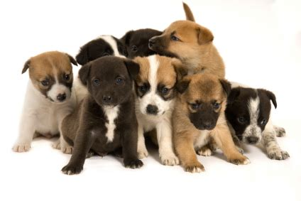 how to a puppy from a litter litter separation