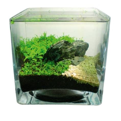 small aquarium aquascape how to aquascape small tanks practical fishkeeping magazine